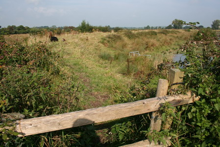 Stile leading to Maigue embankment