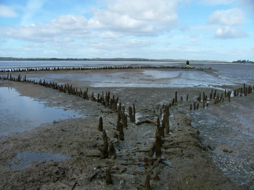 Mediaeval fishweir at the Boarland Rock in the Fergus Estuary © Dr Aidan O'Sullivan, UCD 2008