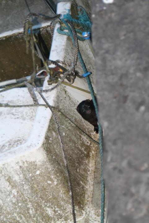 Belle at Barley Harbour 06_resize