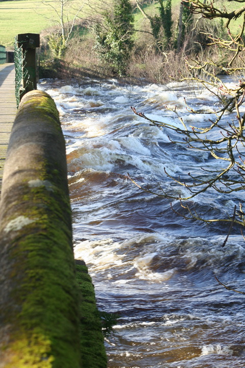 Castleconnell water level 20140210 267_resize