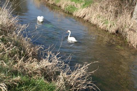 River Brickey 083_resize